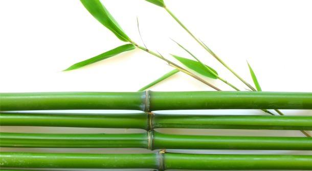 Renewable Bamboo